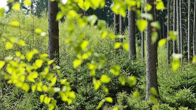 bosque, árboles, la naturaleza